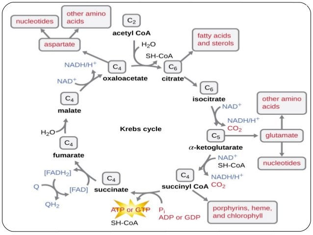 difference between Primary and secondary metabolites