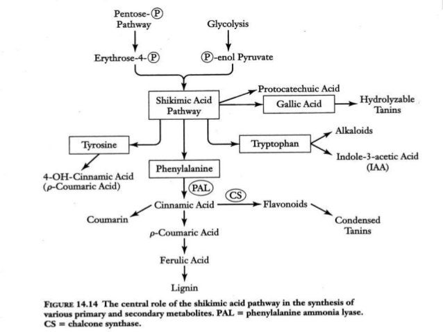 Isolation of Reserpine Roots are powdered & moisten with 10 % NaHCo3 & ext. with benzene untill give positive reaction wit...