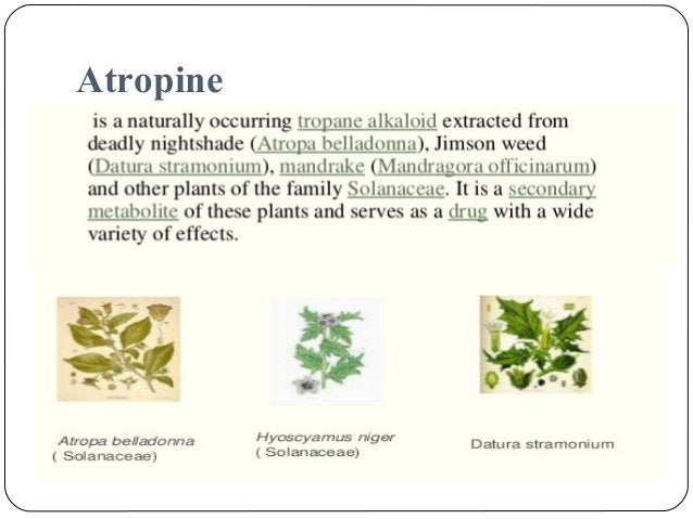 Podophyllum Indian Podophyllum Synonym – Indian May apple, Wild lemon, Duck's Foot, Hog Apple Biological source – It con...