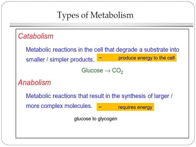 Major Metabolic Pathways Cellular respiration: Glycolysis Anaerobic respiration Kreb's cycle / Citric acid cycle Oxidativ...