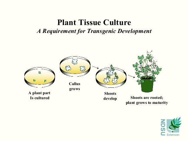 plant cell culture techniques pdf