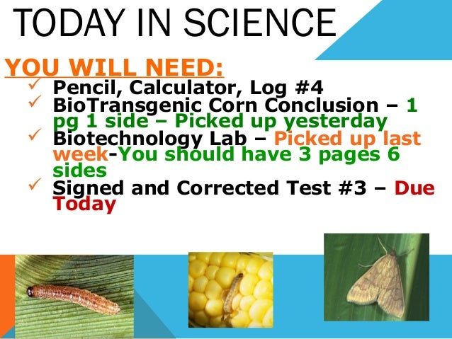 TODAY IN SCIENCE YOU WILL NEED:  Pencil, Calculator, Log #4  BioTransgenic Corn Conclusion – 1 pg 1 side – Picked up yes...