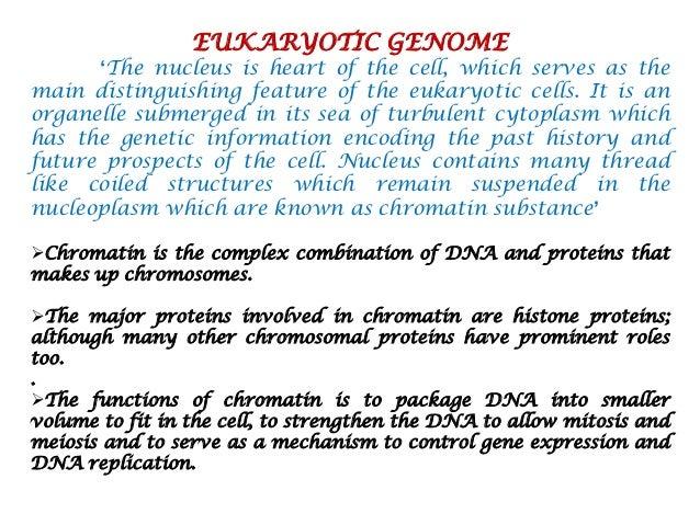 GENOME ORGANIZATION IN EUKARYOTES DOWNLOAD