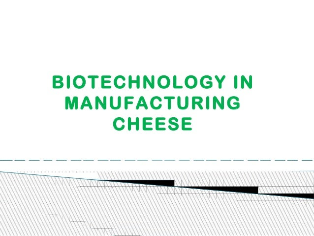 BIOTECHNOLOGY IN MANUFACTURING CHEESE