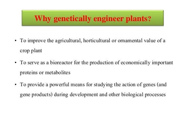 Development of transgenic crops