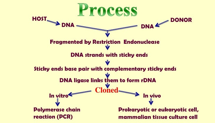 Biotechnology: Process and Application
