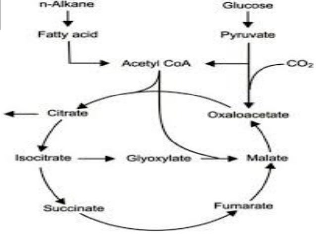 Biotechnological production of citric acid
