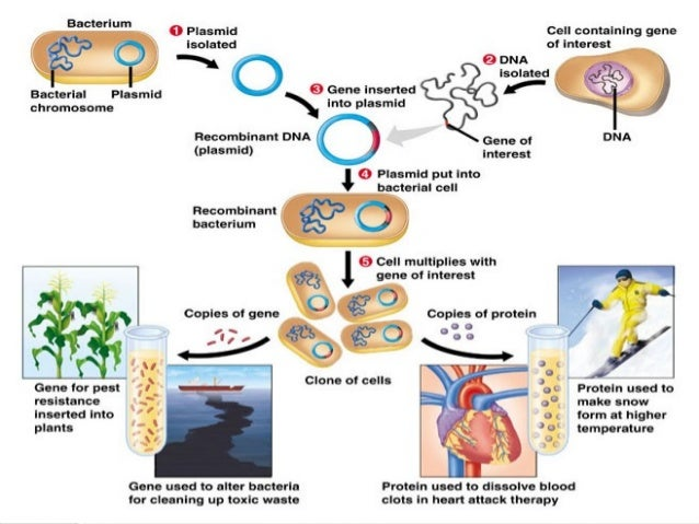 biotechnology and its application in agriculture Plant biotechnology and its application to agriculture by r b flavell afrc  institute of plant science research and john innes institute, colney lane.
