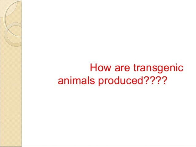 Biotechnology and the ethics behind the creation of transgenic animals