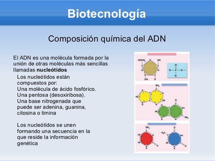 Biotecnología Composición química del ADN El ADN es una molécula formada por la unión de otras moléculas más sencillas lla...