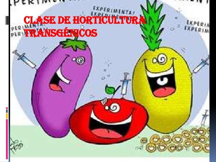 Clase de horticulturatransgénicos