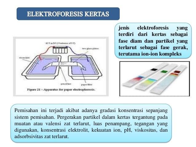 Kelompok 8 Kimia B ( Elektroforesis)