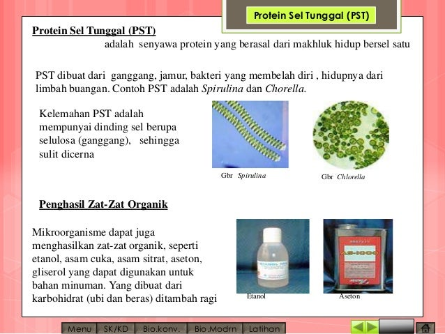 Protein sel tunggal something protein sel tunggal perkembangan protein sel tunggal by bioteknologi ccuart Images