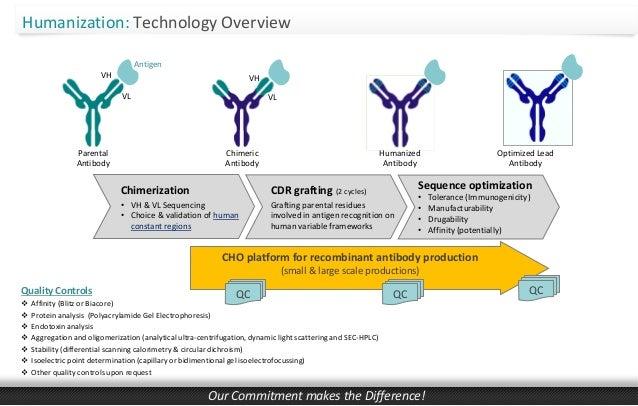 CDR-Grafting Antibody Humanization by BIOTEM