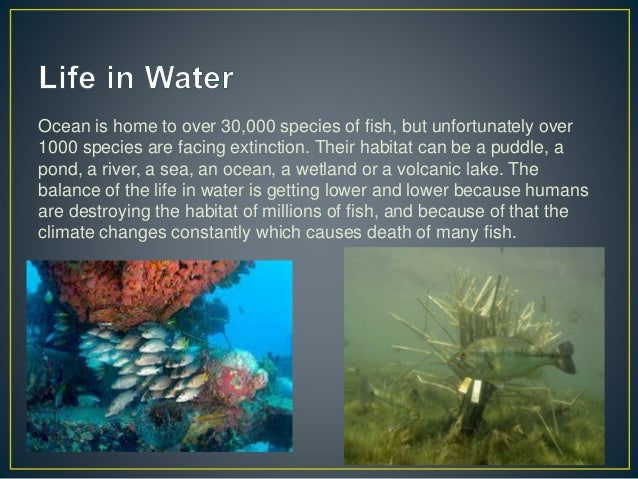 Ocean is home to over 30,000 species of fish, but unfortunately over 1000 species are facing extinction. Their habitat can...