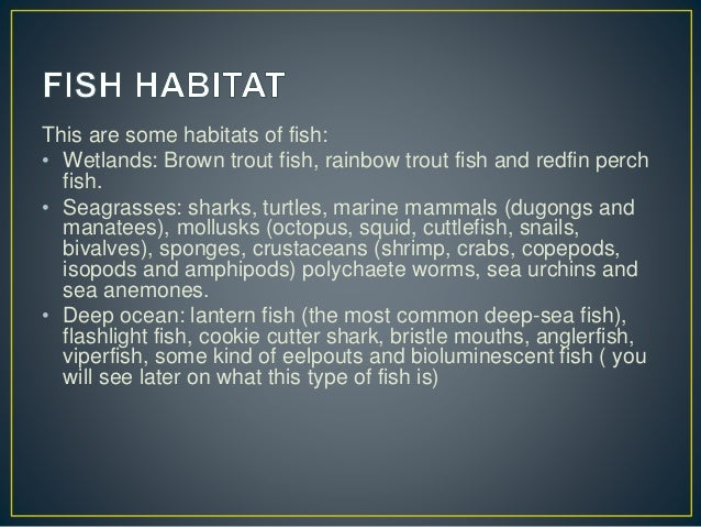 This are some habitats of fish: • Wetlands: Brown trout fish, rainbow trout fish and redfin perch fish. • Seagrasses: shar...