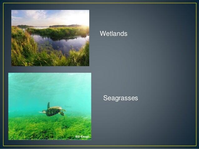 Wetlands Seagrasses