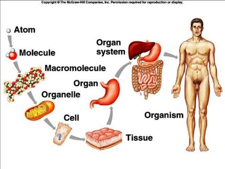 why are living organisms so diverse biology essay Biology is the science of life biology is the study of living things we usually take it for granted that we can tell the difference between something that is alive and something that is not alive between organic and inorganic things but scientists don't take anything for granted.
