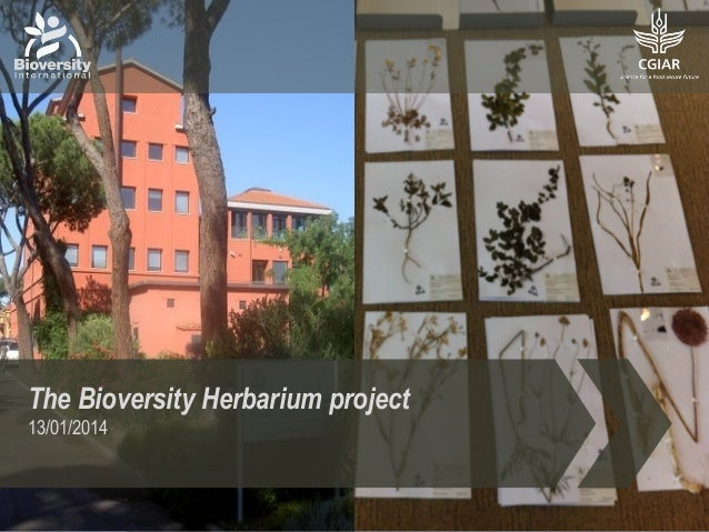 The Bioversity Herbarium project 13/01/2014