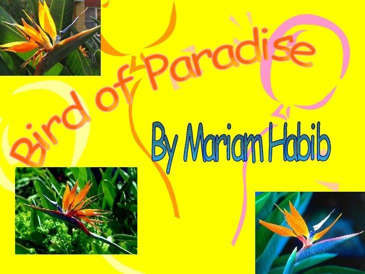 Bird of Paradise By Mariam Habib