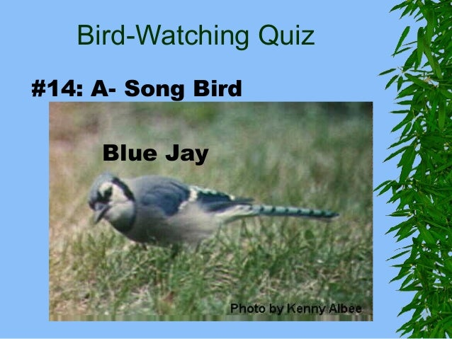 Bird Watching Quiz