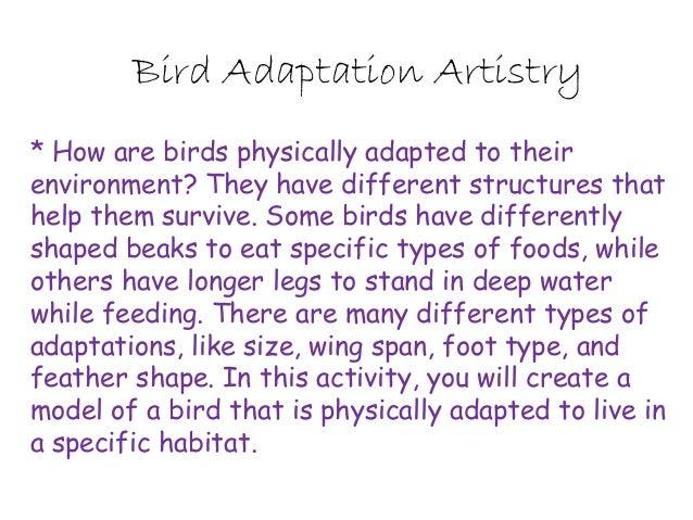 paragraph on birds