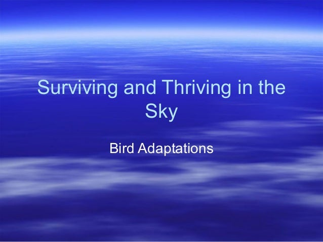Surviving and Thriving in the Sky Bird Adaptations