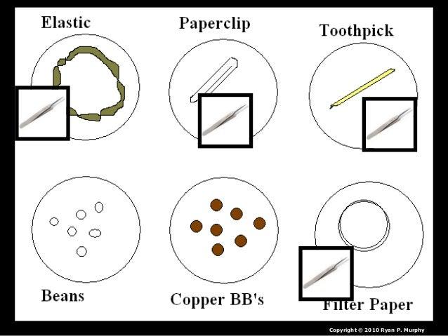 Evolution, Bird Adaptations Lesson, Biology PowerPoint