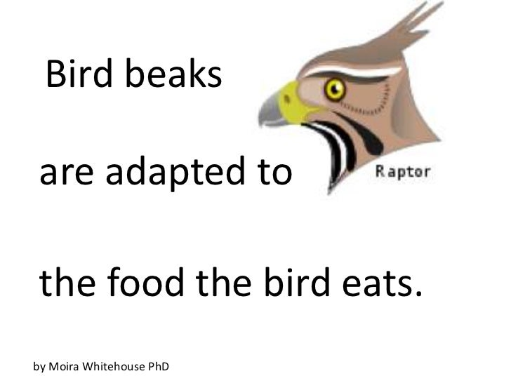 Bird beaksare adapted tothe food the bird eats.by Moira Whitehouse PhD
