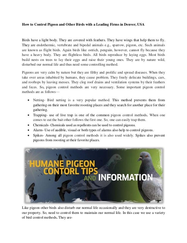 Bird Control Methods - Pigeon Repellent, Trapping & Removal