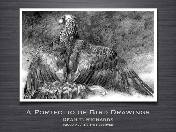 A Portfolio of Bird Drawings         Dean T. Richards         ©2009 All Rights Reserved