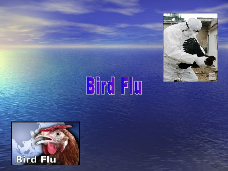 Contents  1.Hype about bird flu 2.Bird flu symptoms in humans 3.How to stop the spread of flu germs 4.Credits