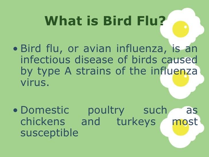 an analysis of the deadly avian influenza virus or avian bird flu