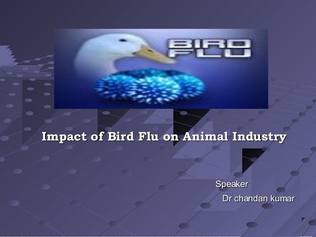 Impact of Bird Flu on Animal Industry                          Speaker                           Dr chandan kumar