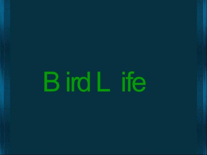 Bird Life English