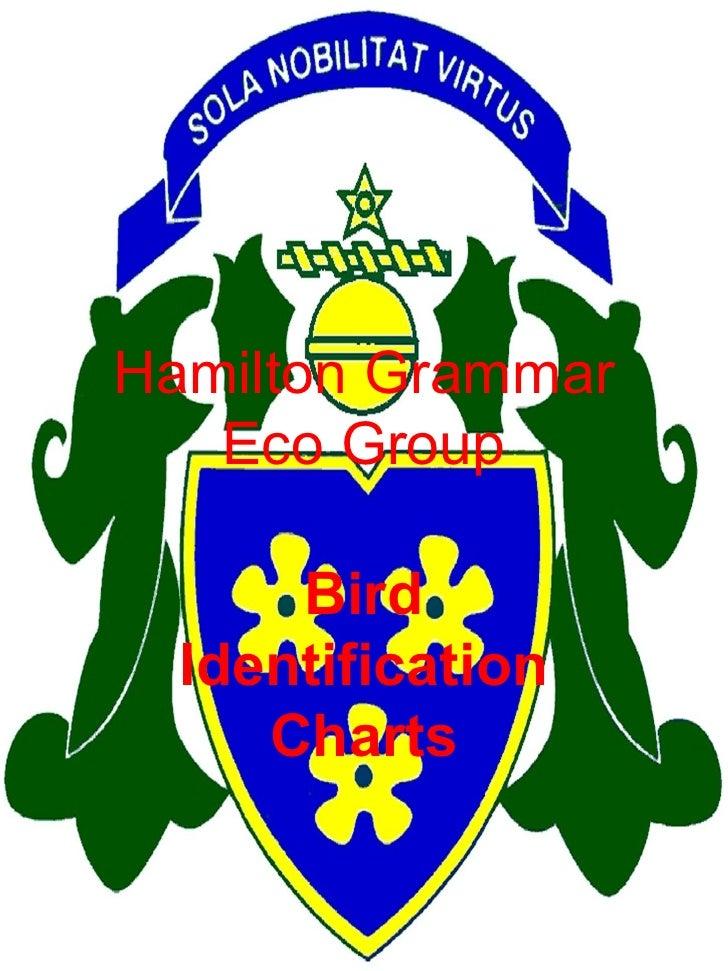 Hamilton Grammar Eco Group Bird Identification Charts