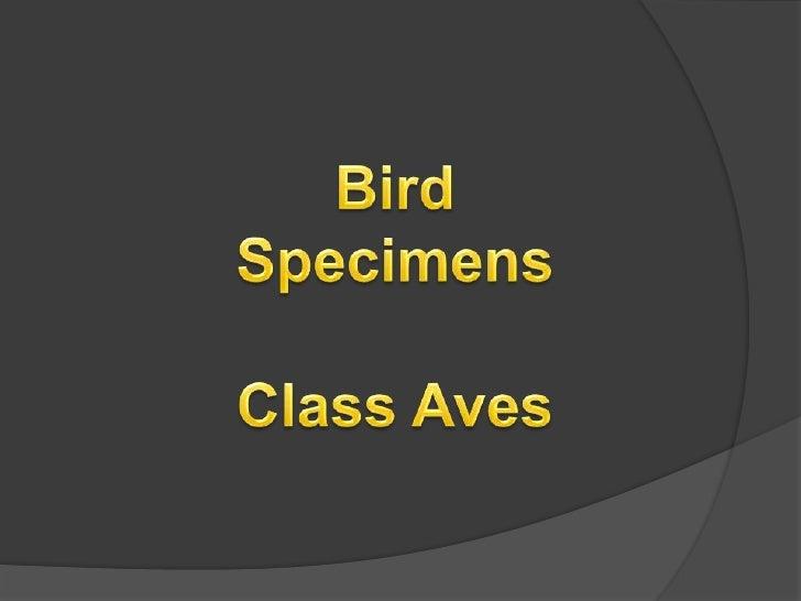 Bird<br />Specimens<br />Class Aves<br />