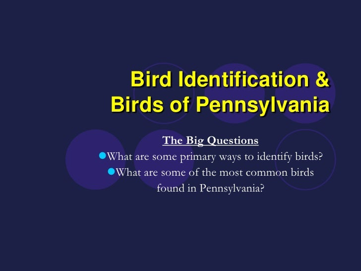 Bird Identification &   Birds of Pennsylvania             The Big Questions What are some primary ways to identify birds?...