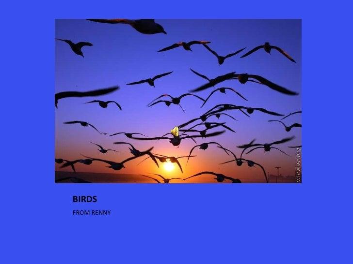 BIRDS<br />FROM RENNY<br />