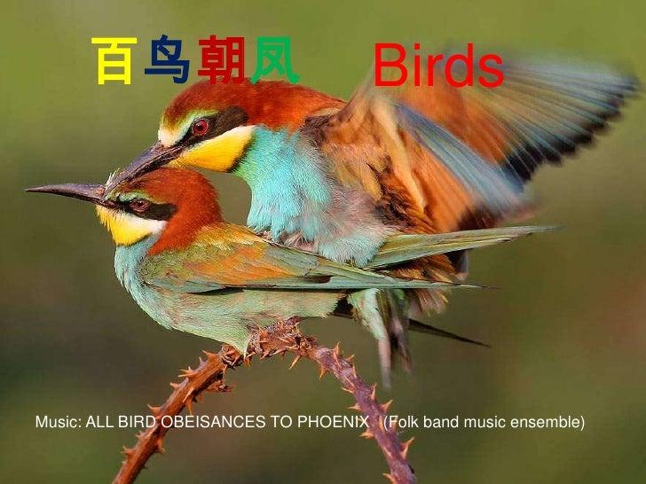 百鸟朝凤<br />Birds<br />Music: ALL BIRD OBEISANCES TO PHOENIX (Folk band music ensemble)<br />