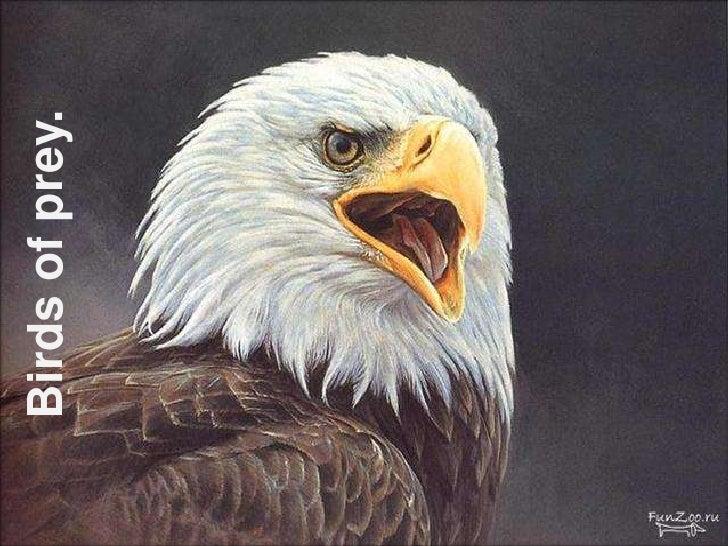 Birds of prey.<br />