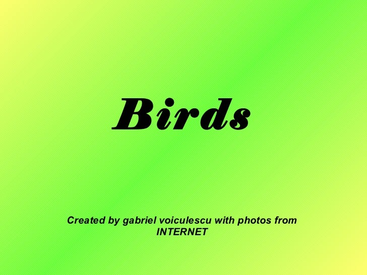 Birds Created by gabriel voiculescu with photos from INTERNET