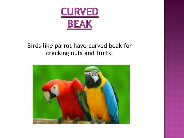 Some birds like eagle and vulture eat flesh.  Such birds have strong, hard and curved         beak for tearing the flesh. ...