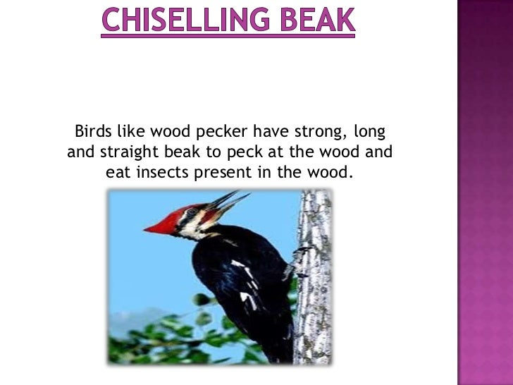 Some birds like sunbird and hooper havelong and slender beak. Sunbird sucks nectarfrom flowers while hooper takes out inse...