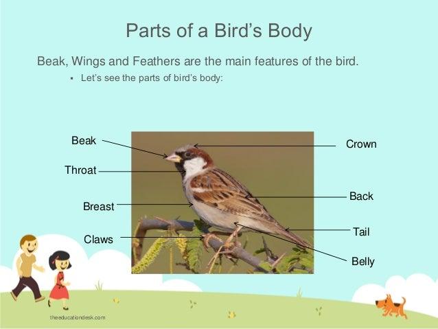 environmental science evs birds class ii. Black Bedroom Furniture Sets. Home Design Ideas