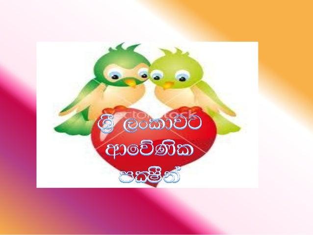 Sri Lankan Birds Slide 2