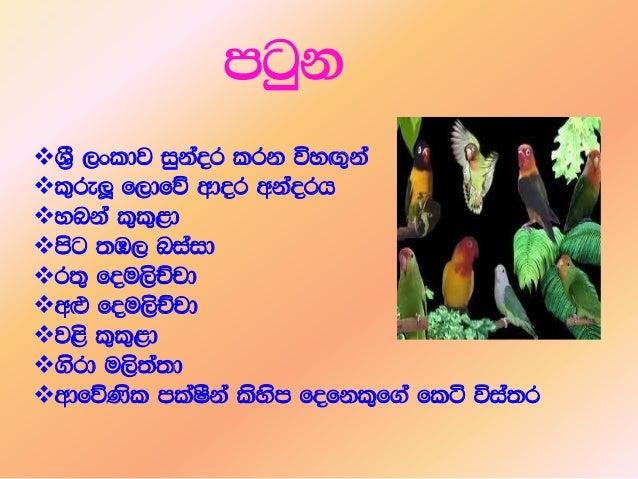 Sri Lankan Birds Slide 3