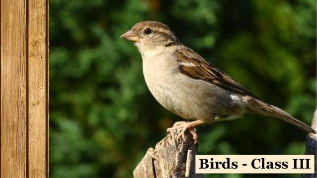 Birds - Class III
