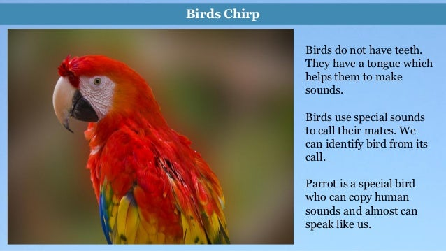 write few lines about parrot in english