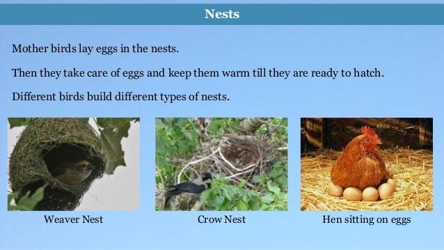Environmental Science Evs Birds Class Iii